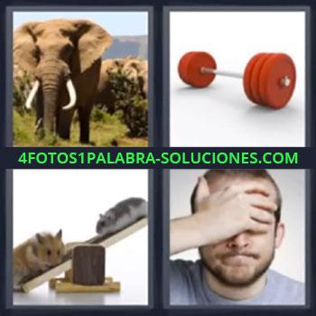 4 Fotos 1 Palabra - ocho-letras elefante pesas. Ratones. Hombre con mano en la cabeza.