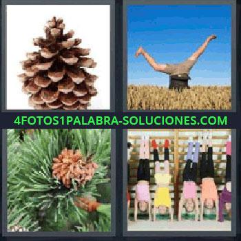 4 Fotos 1 Palabra - piña de pino, hombre haciendo el pino en el campo, pino con piñas, gente haciendo el pino en el gimnasio, hombre haciendo la vertical.