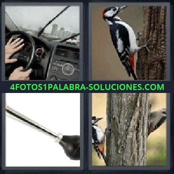 4 Fotos 1 Palabra - volante pájaro, Volante de un coche, Pájaro en un tronco, Claxon, Tronco con dos pájaros.