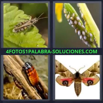 4 Fotos 1 Palabra - cinco-letras insectos, Gusano, Mariposa, Saltamontes