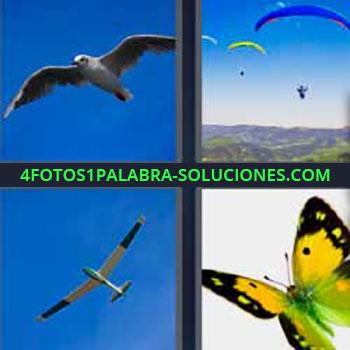 4 Fotos 1 Palabra - cinco-letras gaviota o ave volando. Parapente. Avión ultraligero. Mariposa.