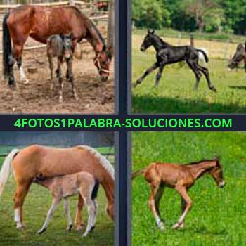 4 Fotos 1 Palabra - cuatro-letras caballos. Yegua y su cría. Caballo pequeño o poni. Potros corriendo en el pasto.