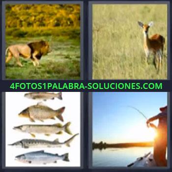 4 Fotos 1 Palabra - cinco-letras leon peces, Venado o ciervo, Pescados, Hombre pescando