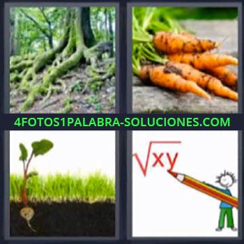 4 Fotos 1 Palabra - zanahoria, árbol en bosque, planta, 0peraciones matemáticas