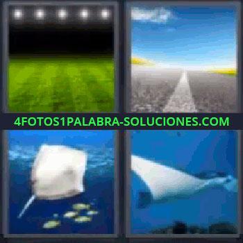 4 Fotos 1 Palabra - seis-letras campo de fútbol, Campo de fútbol vacío e iluminado, carretera y cielo azul, Raya y peces bajo el mar, Manta raya.