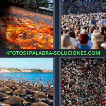 4 Fotos 1 Palabra - mucha gente. Muchedumbre. Playa llena de sombrillas y personas. Aglomeración de gente.