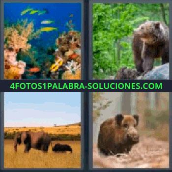 4 Fotos 1 Palabra - seis-letras acuario con peces. Oso. Elefante. Jabalí.