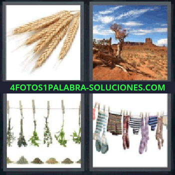 4 Fotos 1 Palabra - ocho-letras espigas de trigo, Espigas, Desierto, Hierbas colgadas con pinzas, Ropa tendida.