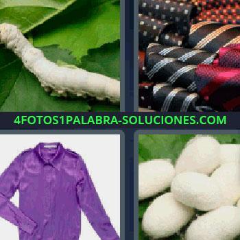 4 Fotos 1 Palabra - cuatro-letras corbatas de rayas, bolitas blancas peludas, gusano blanco en hojas verdes, sudadera, camisa, camiseta o playera morada.