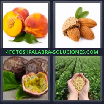 4 Fotos 1 Palabra - siete-letras almendras durazno o melocoton, Almendras, Maracuya, Manos con simientes en plantación