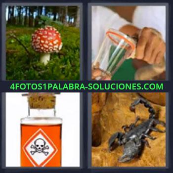 4 Fotos 1 Palabra - ocho-letras escorpion. Seta u hongo. Serpiente. Botella con signo peligro.