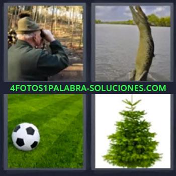 4 Fotos 1 Palabra - cuatro-letras cocodrilo, anciano en el campo mirando por prismáticos, cocodrilo saltando, balón de fútbol en el césped, árbol, abeto …