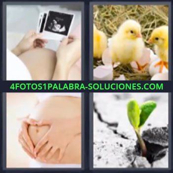 4 Fotos 1 Palabra - ocho-letras embarazo, mujer embarazada viendo fotos, pollitos, embarazada tocándose la barriga o panza, planta naciendo
