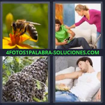4 Fotos 1 Palabra - seis-letras abeja enjambre. Chico dormido. Chico jugando videojuegos regañado por mujer.