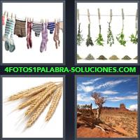 Calcetines y Ropa Interior tendida, Hierbas colgadas de una soga, Espigas de trigo, Desierto |