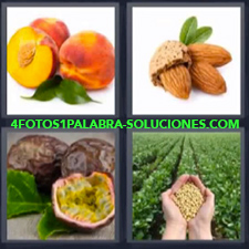 4 Fotos 1 Palabra - almendras durazno Manos con simientes en plantación maracuyá melocotón |