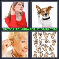 4 Fotos 1 Palabra - Mujer Con Suéter Rojo Perro Escuchando Señales Para Sordomudos Orejas |