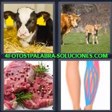 4 Fotos 1 Palabra - vaca pierna Carne Piernas Ternera Vaca con su cría |