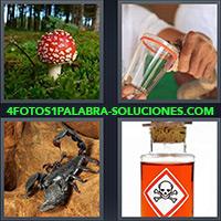 Hongo rojo con blanco en un bosque, Extrayendo veneno de serpiente en vaso, Alacrán o escorpión