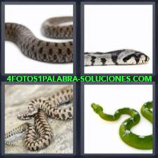 4 fotos 1 Palabra - 6 letras: Culebra Serpiente con motitas negras Serpiente gris Serpiente verde Serpientes |