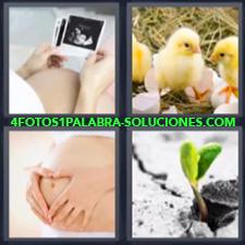 4 Fotos 1 Palabra - 4 Letras: Embarazo, Mujer Embarazada Viendo Fotos, Pollitos, Embarazada Tocandose La Barriga O Panza, Planta Naciendo |